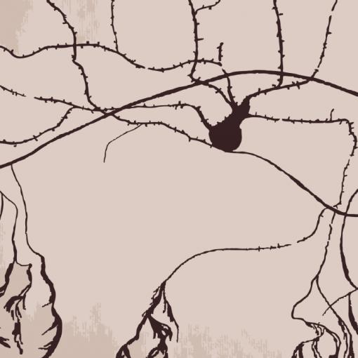 [:en]https://www.redbubble.com/people/kdeane/works/41188219-nests-in-cerebellum?asc=u[:]